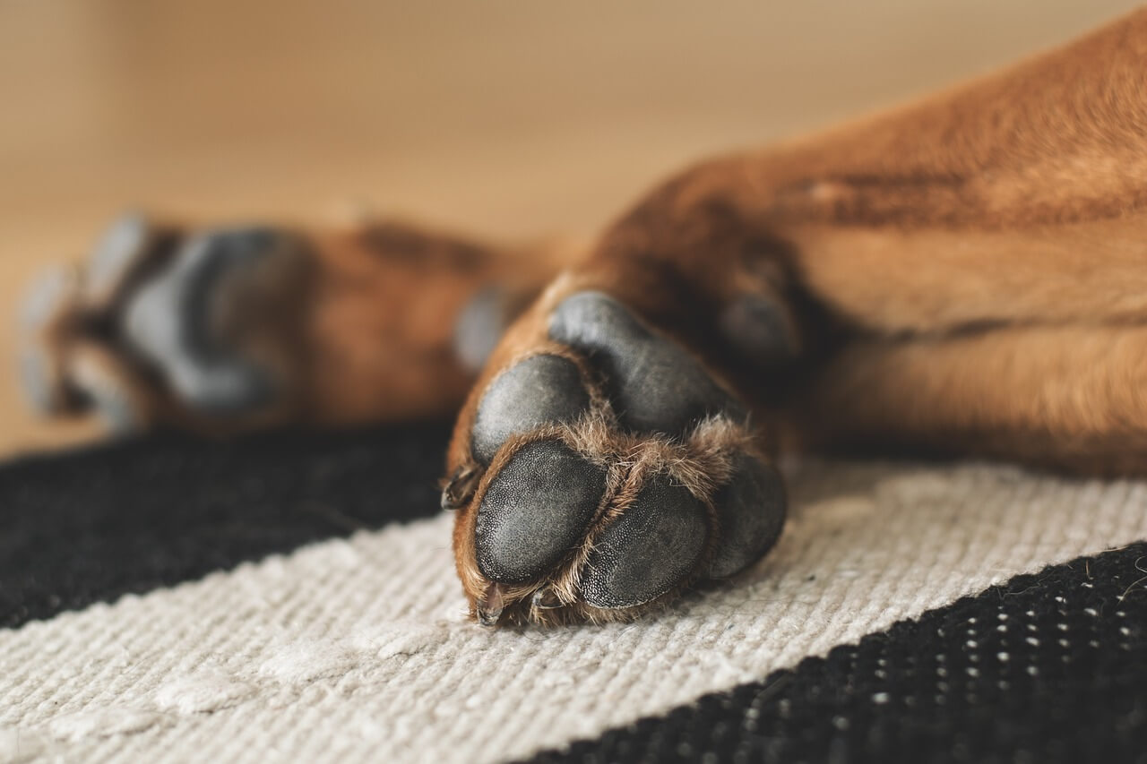 how to stop dog bleeding nail